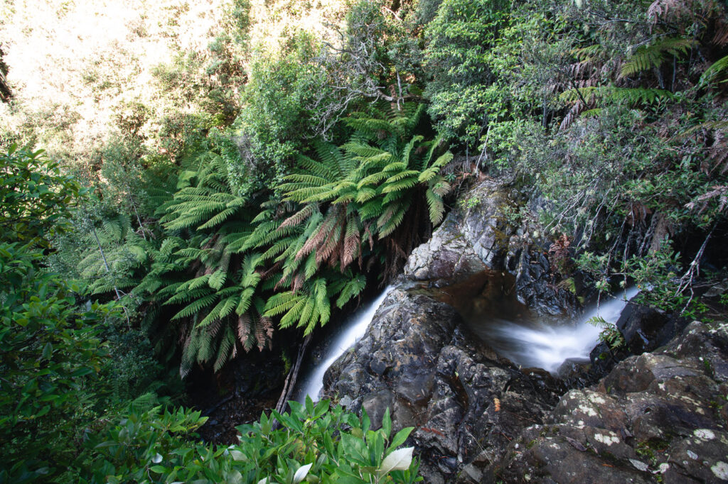 MYRTLE FOREST FALLS