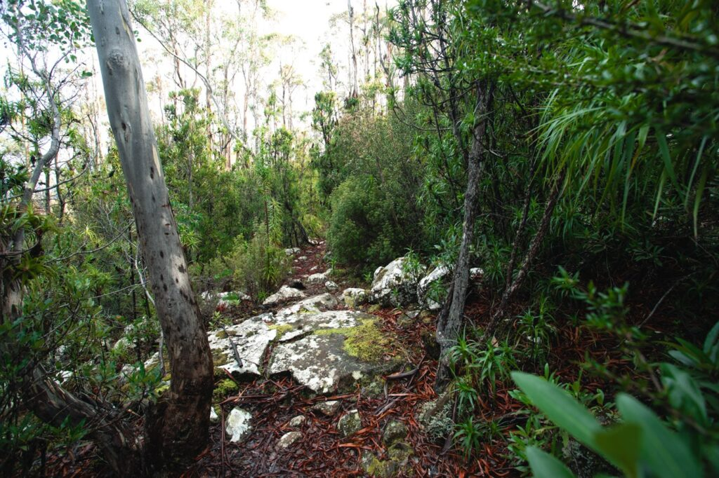 DESCENDING TO WELLINGTON FALLS TASMANIA