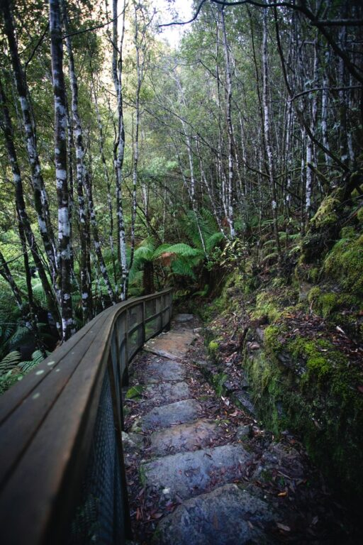SILVER FALLS TRACK TO THE SPRINGS