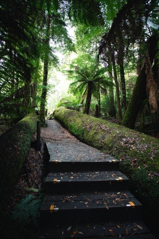 STYX TALL TREES WALK