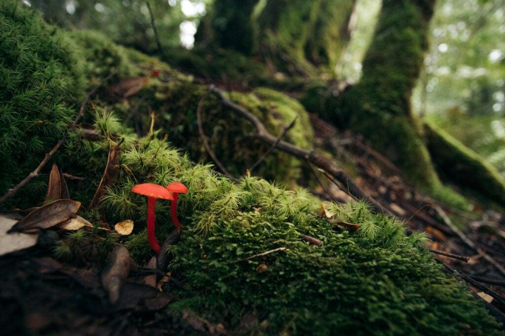 STYX FOREST