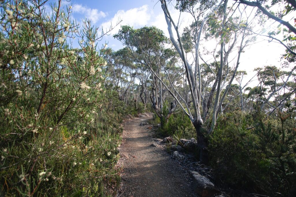 RETURNING FROM FORTESCUE BAY AT THE END OF THE THREE CAPES TRACK FOR FREE