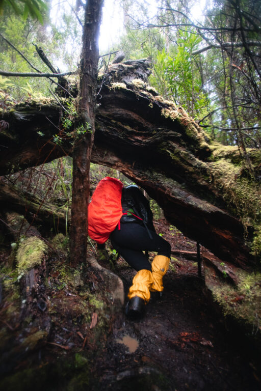 CLIMBING UNDER LOGS ON THE FEDERATION PEAK TRACK