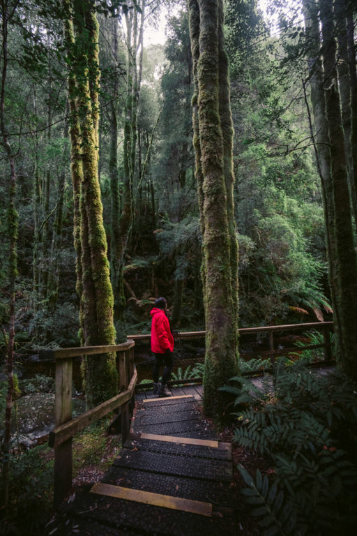NELSON FALLS NATURE TRAIL WALK, THINGS TO DO AT STRAHAN