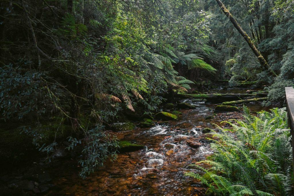 NELSON RIVER FRANKLIN-GORDON WILD RIVRERS NATIONAL PARK TASMANIA