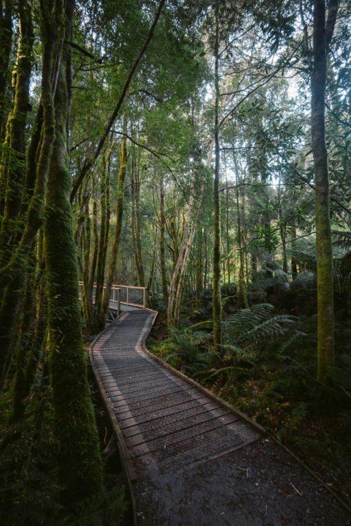 NELSON FALLS NATURE TRAIL WALK TASMANIA