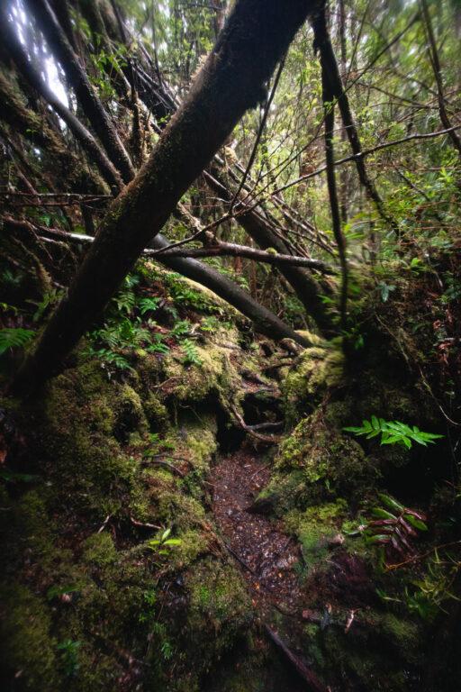 SOUTH PICTON SADDLE TASMANIA