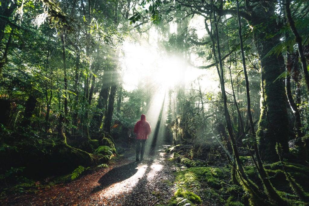 WALKING TRACK TO PHILOSOPHER FALLS LOOKING, TASMANIA