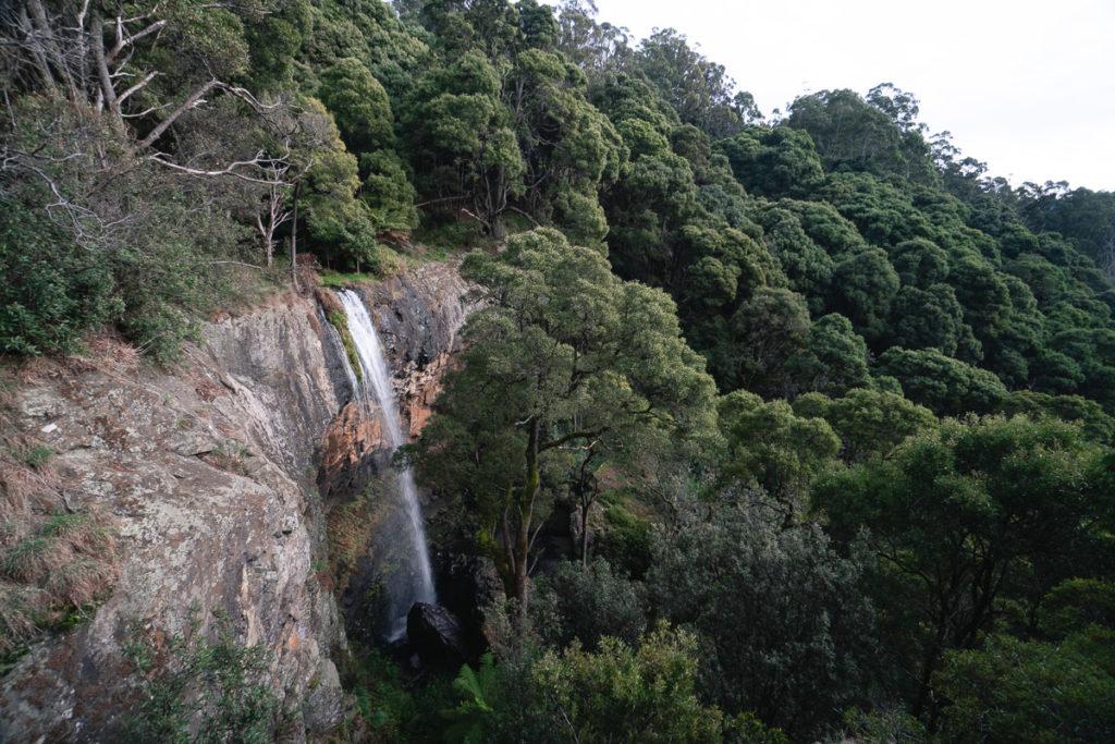 PRESTON FALLS TASMANIA