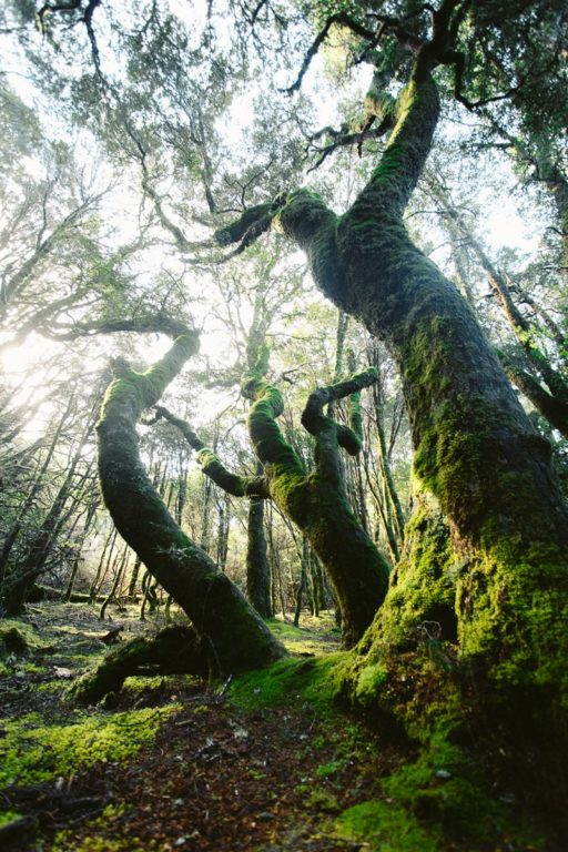 CRADLE MOUNTAIN HIKING TRAILS, THINGS TO DO IN TASMANIA
