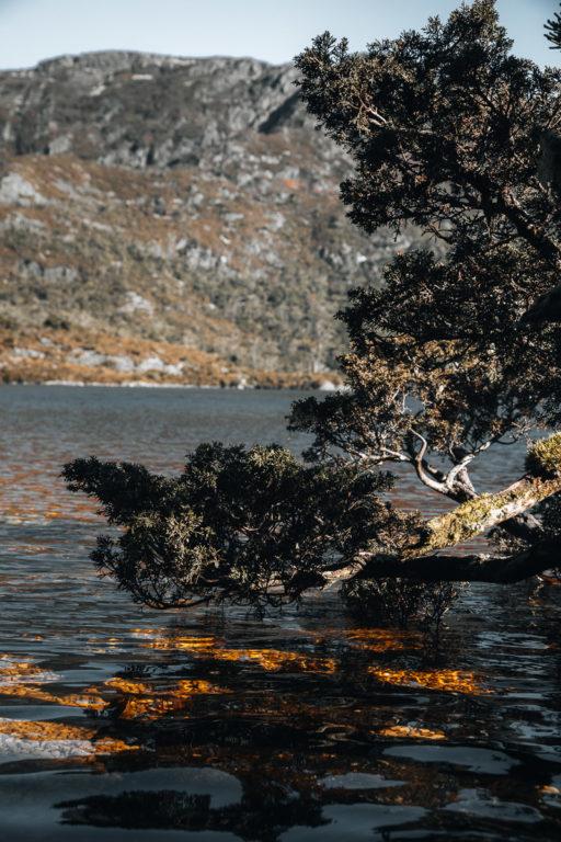DOVE LAKE CIRCUIT TASMANIA