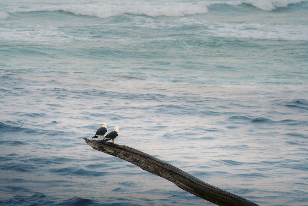 BIRDS AT THE EDGE OF THE WORLD TASMANIA