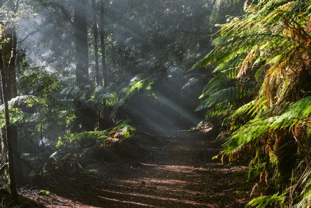SCENIC LIGHT RAYS ON THE MONTEZUMA FALLS WALK
