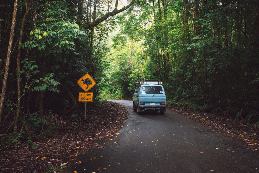 driving the rainforest roads in far north queensland