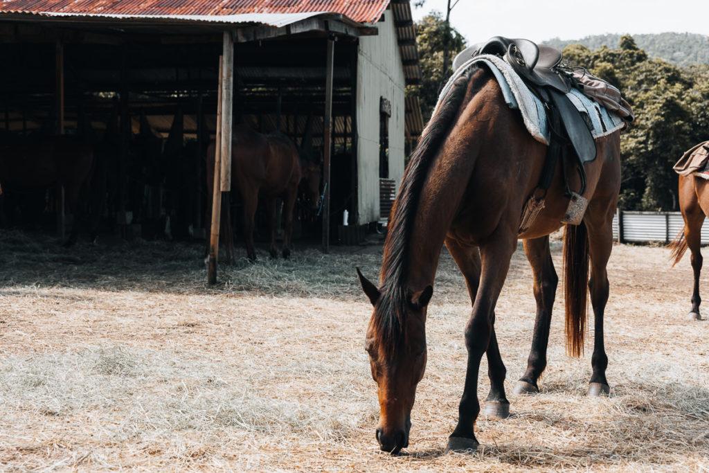 HORSE AT CAPE TRIBULATION