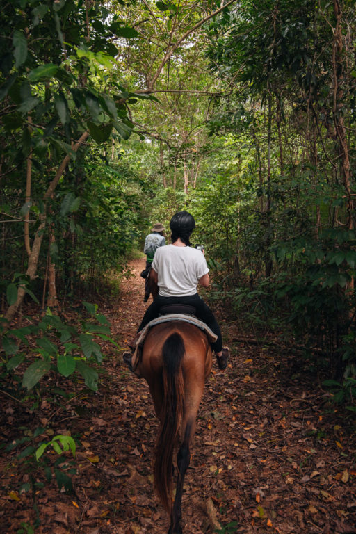 DAINTREE RAINFOREST HORSE RIDING
