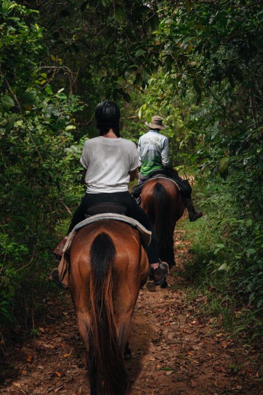 RAINFOREST HORSE RIDE, CAPE TRIBULATION, AUSTRALIA