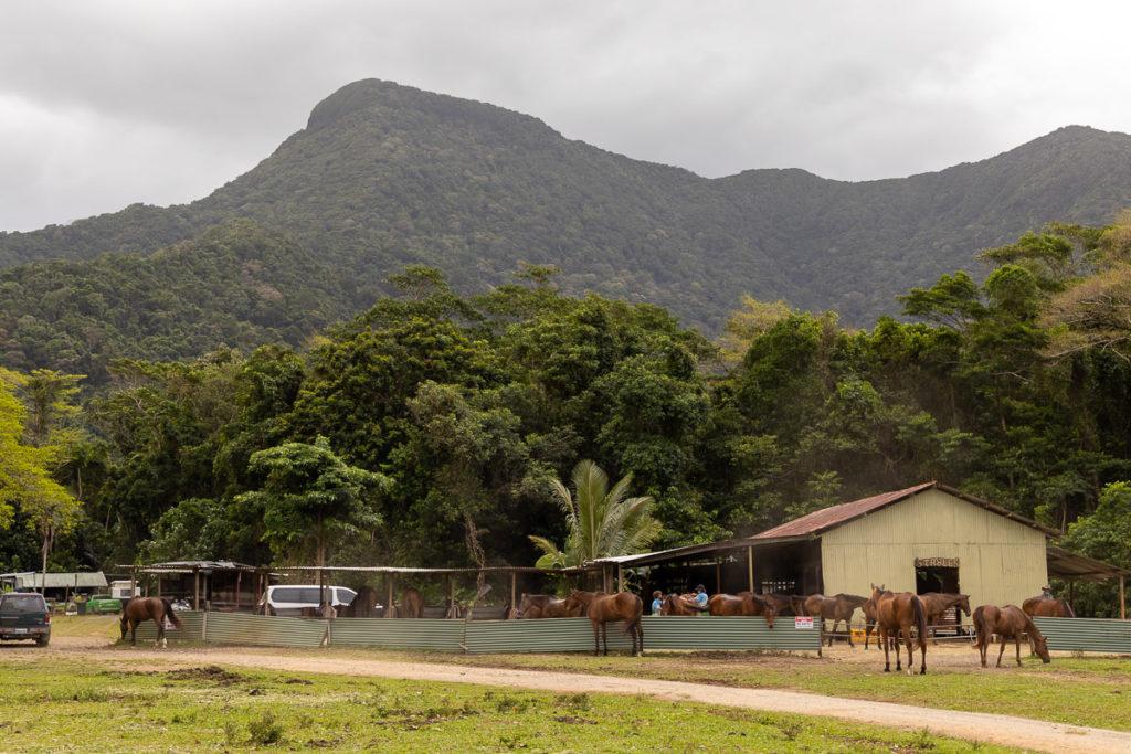 CAPE TRIBULATION HORSE RIDES STABLE