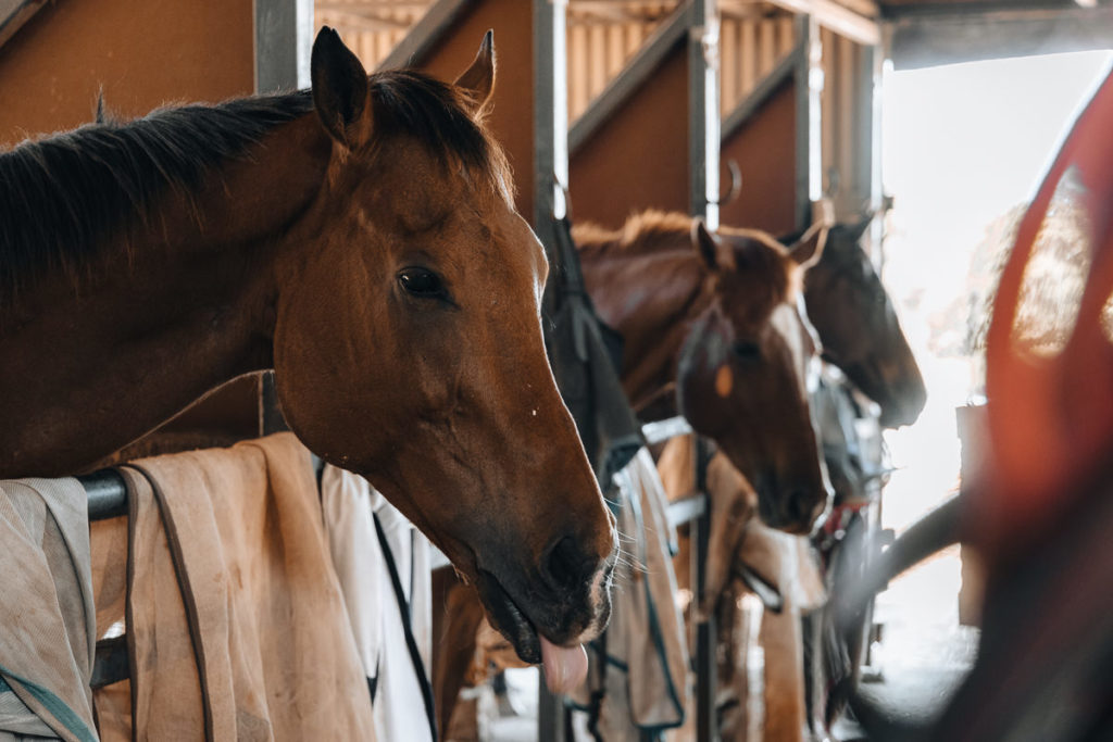 HORSE STABLES IN FAR NORTH QUEENSLAND