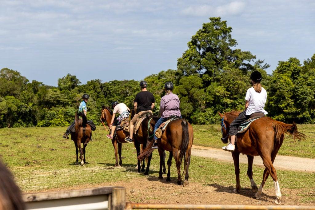 CAPE TRIBULATION HORSE RIDING
