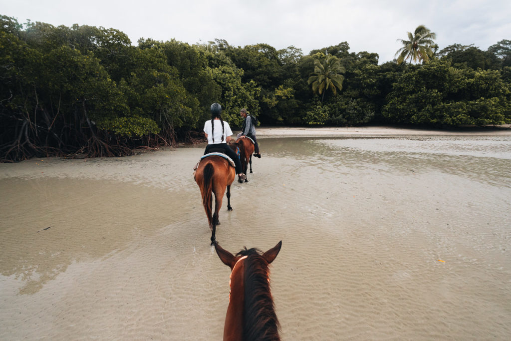 BEACH HORSE RIDE FROM CAIRNS