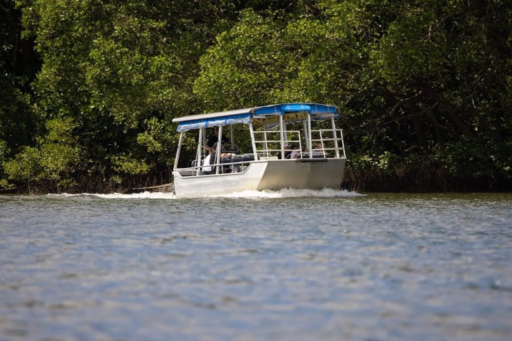 DAINTREE CROCODILE TOUR, SOLAR WHISPER CRUISE FROM CAIRNS