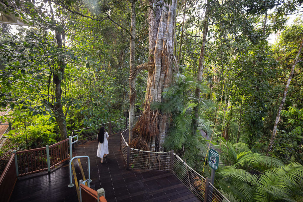 RED PEAK RAINFOREST DISCOVERY CENTRE